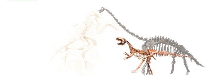 공룡 뼈 이미지